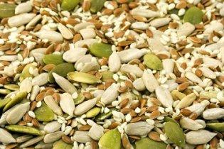 Focus sur les protéines végétales