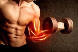 On peut agir sur la qualité et la densité des muscles