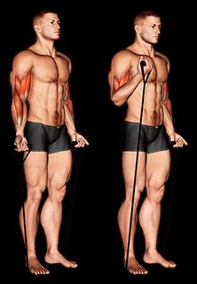 Alternatywne bicepsy zwijają się z gumką