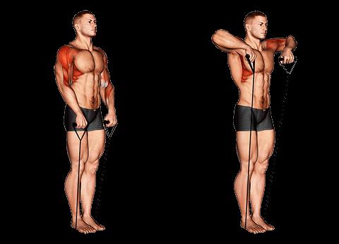 Rowing avec élastique