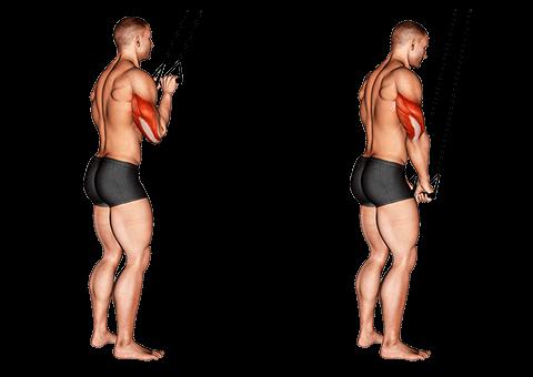 Przedłużenie tricepsu z gumką