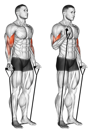 Band alternating biceps curl
