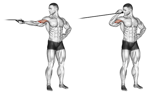Band one overhead biceps curl