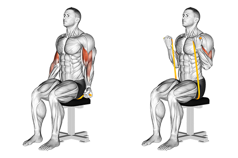 Resistance band seated biceps curl